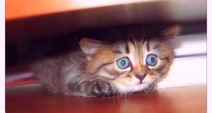 темные места кошка прячется